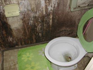 トイレ 壁紙 カビ